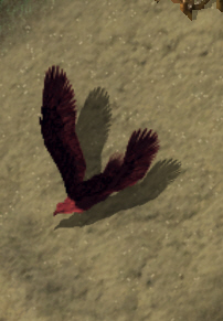 Image result for UO Phoenix