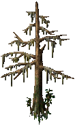 Cypress Tree (Straight).png