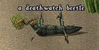Deathwatch beetle.jpg