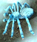 Frost spiderkr.png