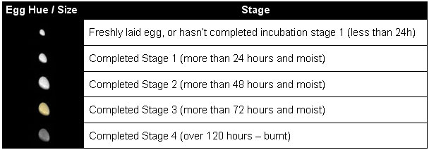 Egg stages chart.jpg