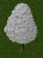 11th collection snow tree.jpg