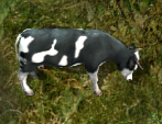 Cowkr.png