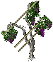 Grapevines south 2.png