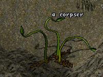 Corpser