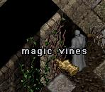 Magic vines.jpg