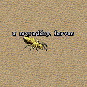 File:Myrmidex larvae.png